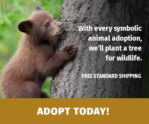 Symbolic Adoption offer with brown bear