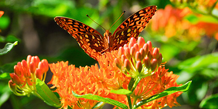 Photo of butterfly by Gregory Jaynes