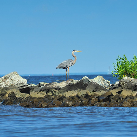 Heron standing on rocks by water