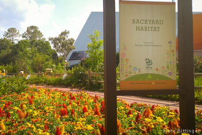 perennial flower bed at Disney's Epcot