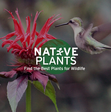 Native Plants - Find the Best Plants for Wildlife