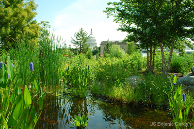 National Garden Pond with Capitol US Botanic Garden