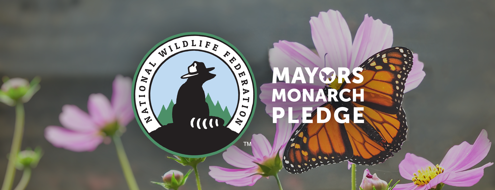 Mayors' Monarch Pledge   National Wildlife Federation