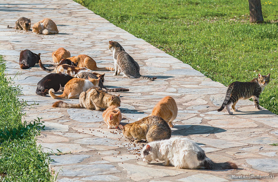 Feral cats fed on neighborhood sidewalk