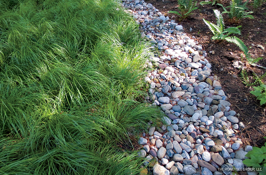 Pennsylvania Sedge, residential garden