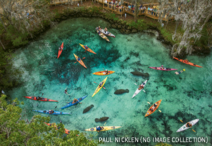Swimmers and boats crowd manatees in Three Sisters Springs