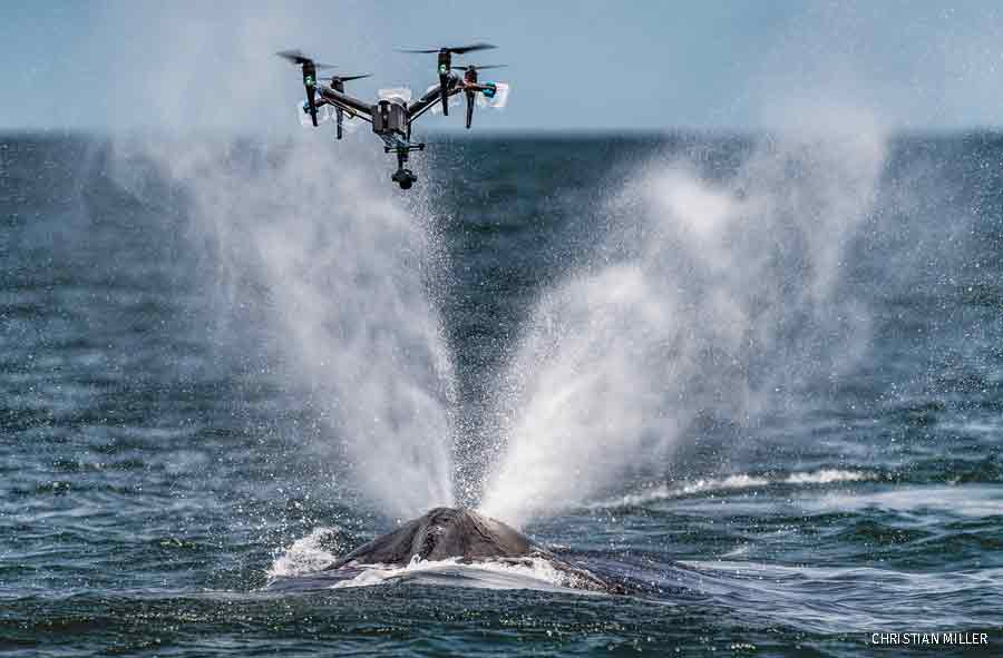 Snotbot photgraphing Humpback whales, Gabon