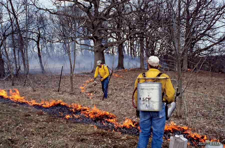Prescribed burn of oak savanna, Bluestem Farm Orchid Preservation, Baraboo, Wisconsin.