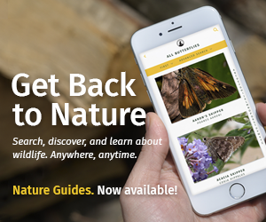 Get Back to Nature. Search, discover, and learn about wildlife. Anywhere, anytime. Nature Guides. Now available!