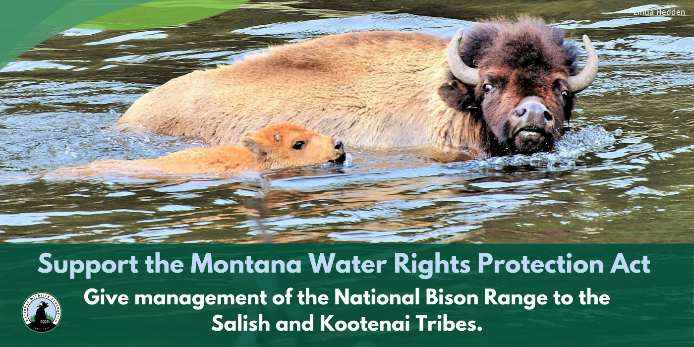 MT Water Rights Protection Act bison