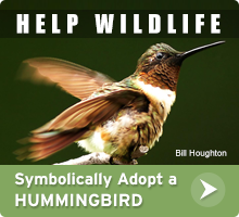 Help Wildlife. Symbolically adopt a ruby-throated hummingbird today!