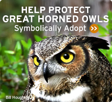 Help Wildlife. Symbolically adopt a great horned owl today!
