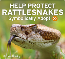 Help Wildlife. Symbolically adopt a rattlesnake today!