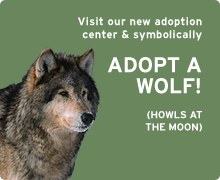 Symbolically adopt a wolf today!