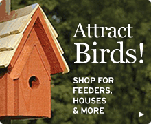 Shop NWF's online catalog for bird houses, bird feeders, and more