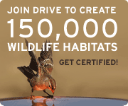 Join our nationwide drive to create 150,000 certified wildlife habitats