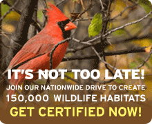 Create a Certified Wildlife Habitat today!