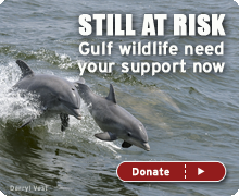 Still at risk - gulf wildlife need your support now!