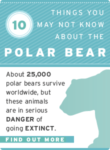 10 Polar Bear Facts