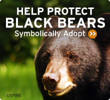 Help Wildlife. Symbolically adopt a black bear today!