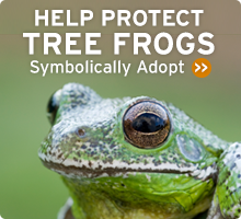 Help Wildlife. Symbolically adopt a tree frog today!
