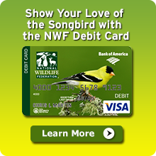 Learn more about NWF's partnership with Bank of America