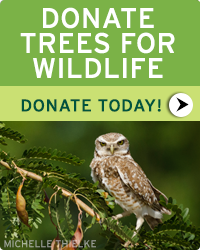 Donate today and help NWF fund trees for wildlife!