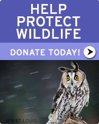 Donate today and help wildlife!