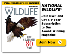 Subscribe to National Wildlife Magazine!