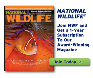 Join today and get a 1 year subscription to National Wildlife magazine