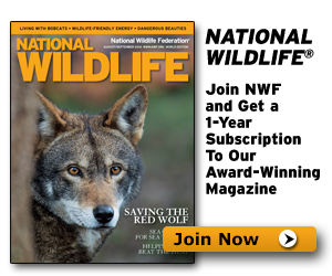 Join NWF and receive a subscription to National Wildlife Magazine!