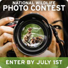 Enter the National Wildlife Photo Contest today!