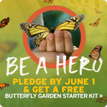 Pledge to become a Butterfly Hero today!