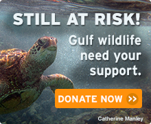 Gulf Wildlife at Risk