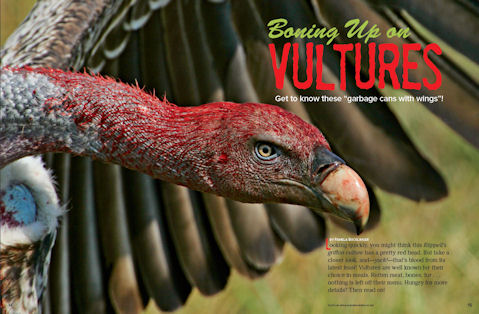 November 2011 Vultures Article