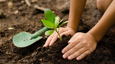 Closeup of child planting, Shutterstock