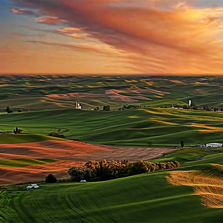 Rolling green hills at dawn
