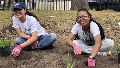 Students planting plants in the ground