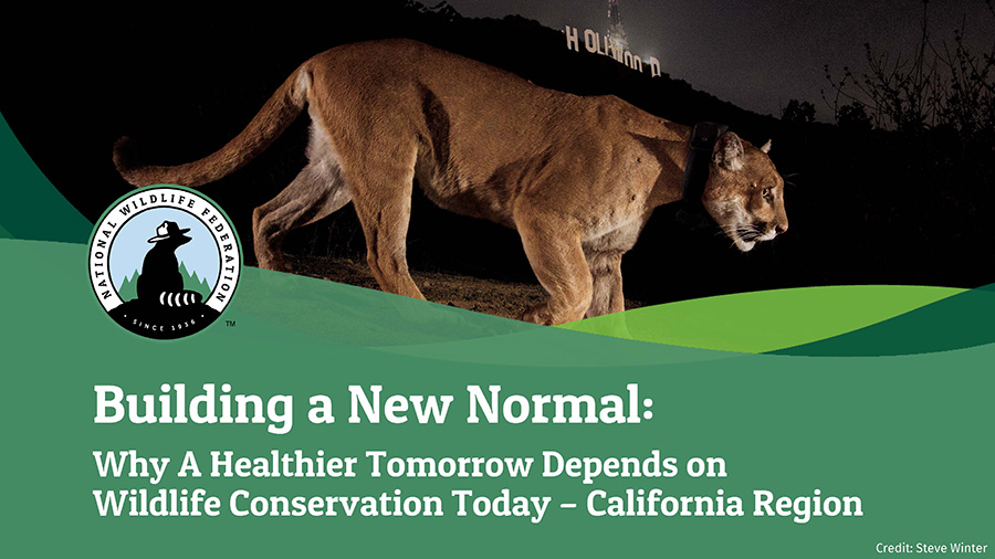 Building a New Normal: Why A Healthier Tomorrow Depends on Wildlife Conservation Today - California Region