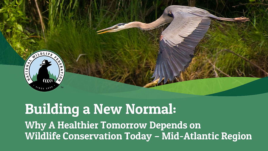 Building a New Normal: Why A Healthier Tomorrow Depends on Wildlife Conservation Today - Mid-Atlantic Region