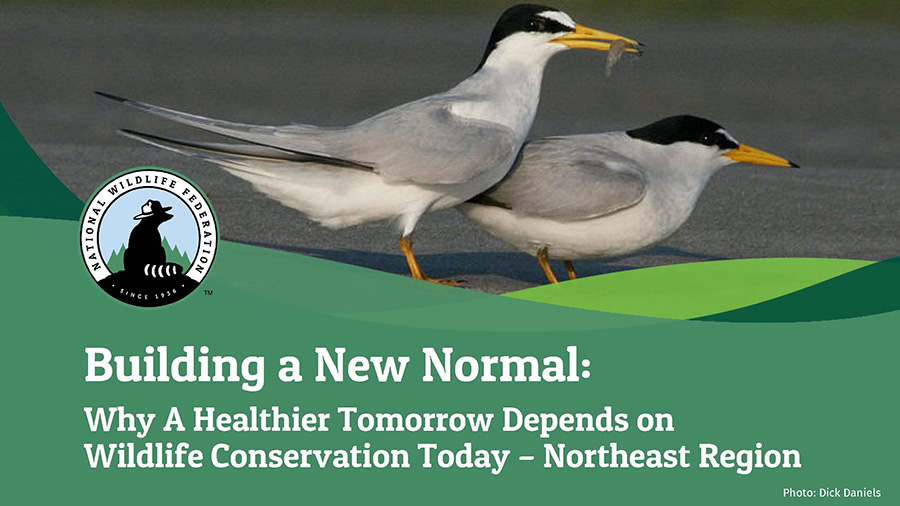 Building a New Normal: Why A Healthier Tomorrow Depends on Wildlife Conservation Today - Northeast Region
