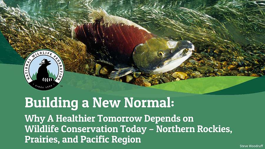 Building a New Normal: Why A Healthier Tomorrow Depends on Wildlife Conservation Today - Northern Rockies, Prairies, and Pacific Region