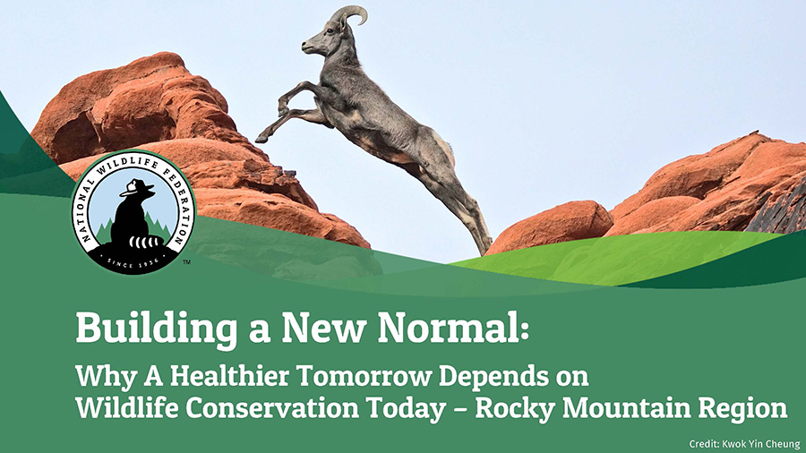 Building a New Normal: Why A Healthier Tomorrow Depends on Wildlife Conservation Today - Rocky Mountain Region