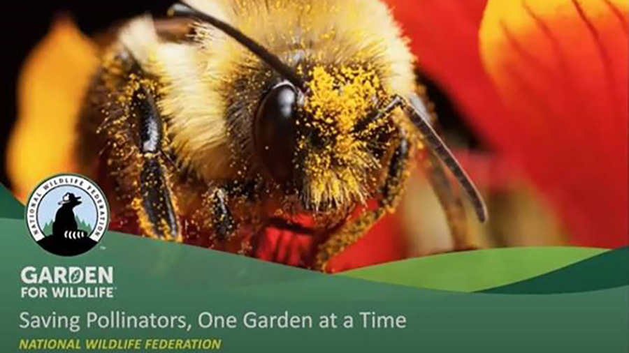 Saving Pollinators, One Garden at a Time