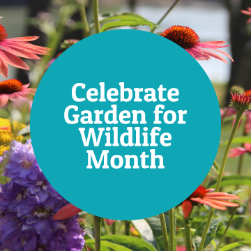 Celebrate Garden for Wildlife Month