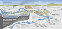 How PFAS Cycles Through the Environment graphic