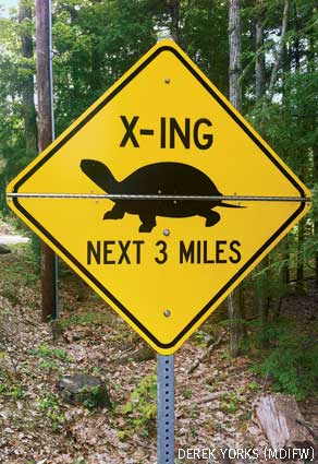 Maine turtle crossing sigh
