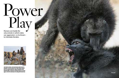 Power Play Opening spread, Chacma baboons, Male attacking a female