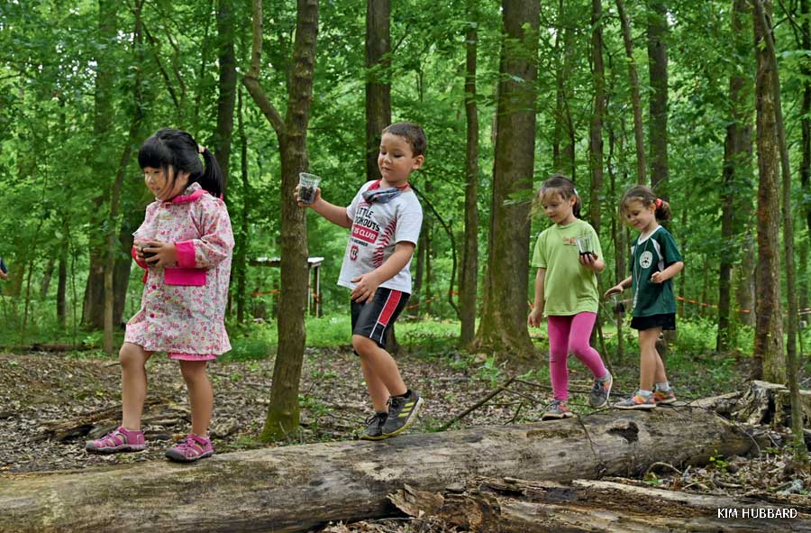 Children in the woods walking on a log