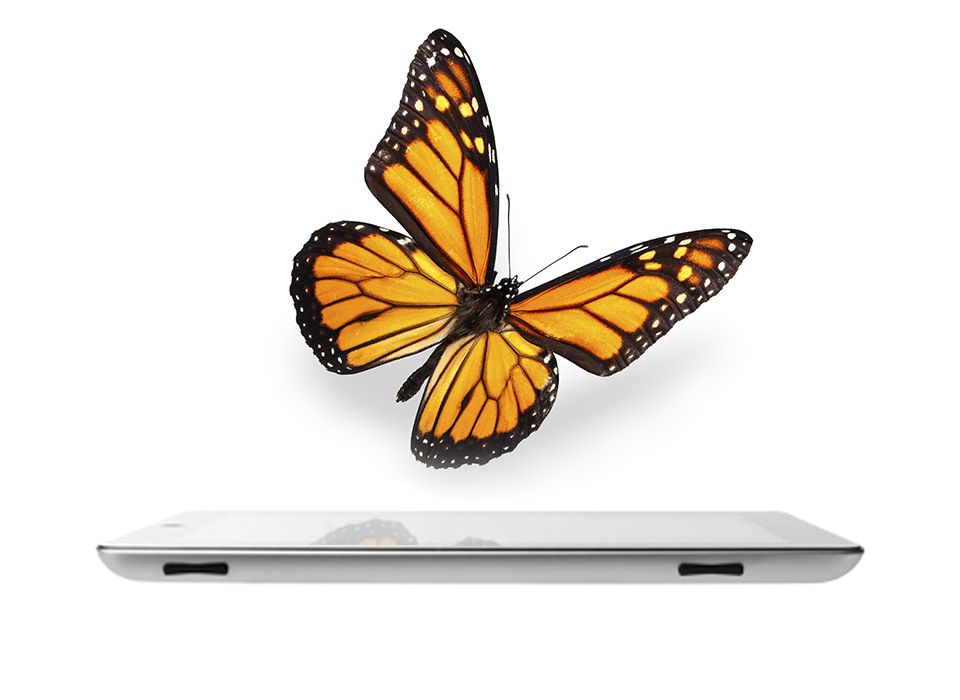 Monarch on top of tablet screen